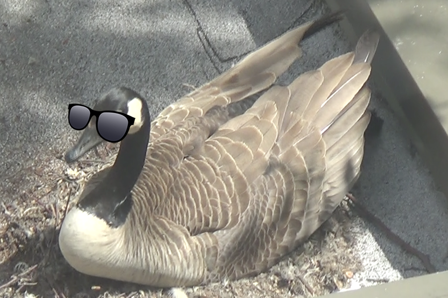 Meet+the+Geese+2%3A+Geesepocalypse