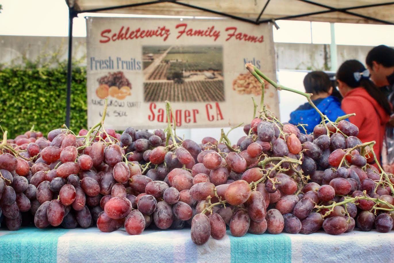 Belmont's farmers' market filled with fresh fruit and vegetables on Sunday morning. Samples are laid out for customers to taste the local produce.