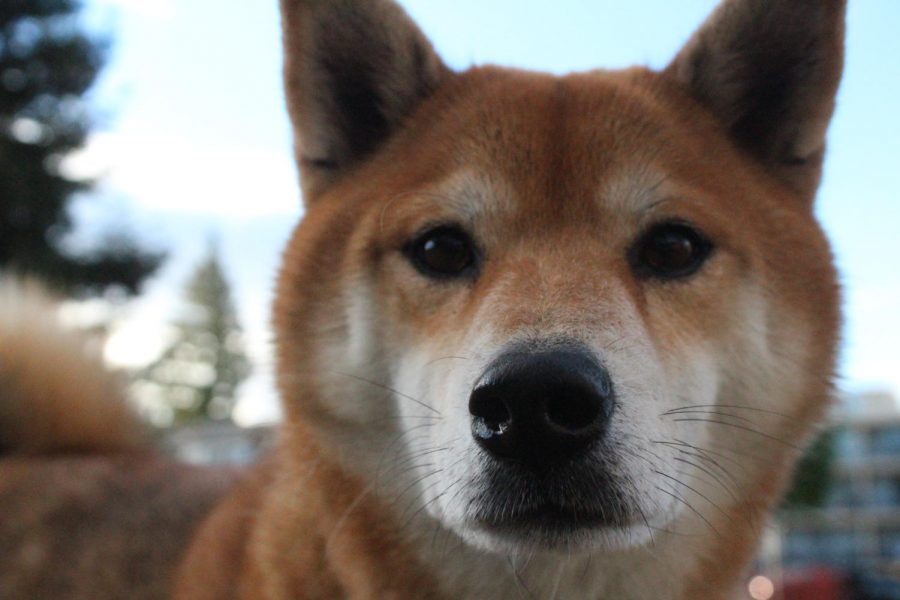 Dog flu tests pet owners' attentiveness