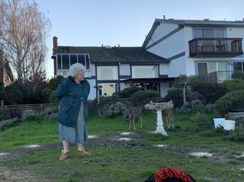 Belmont wildlife has a 'deer' friend