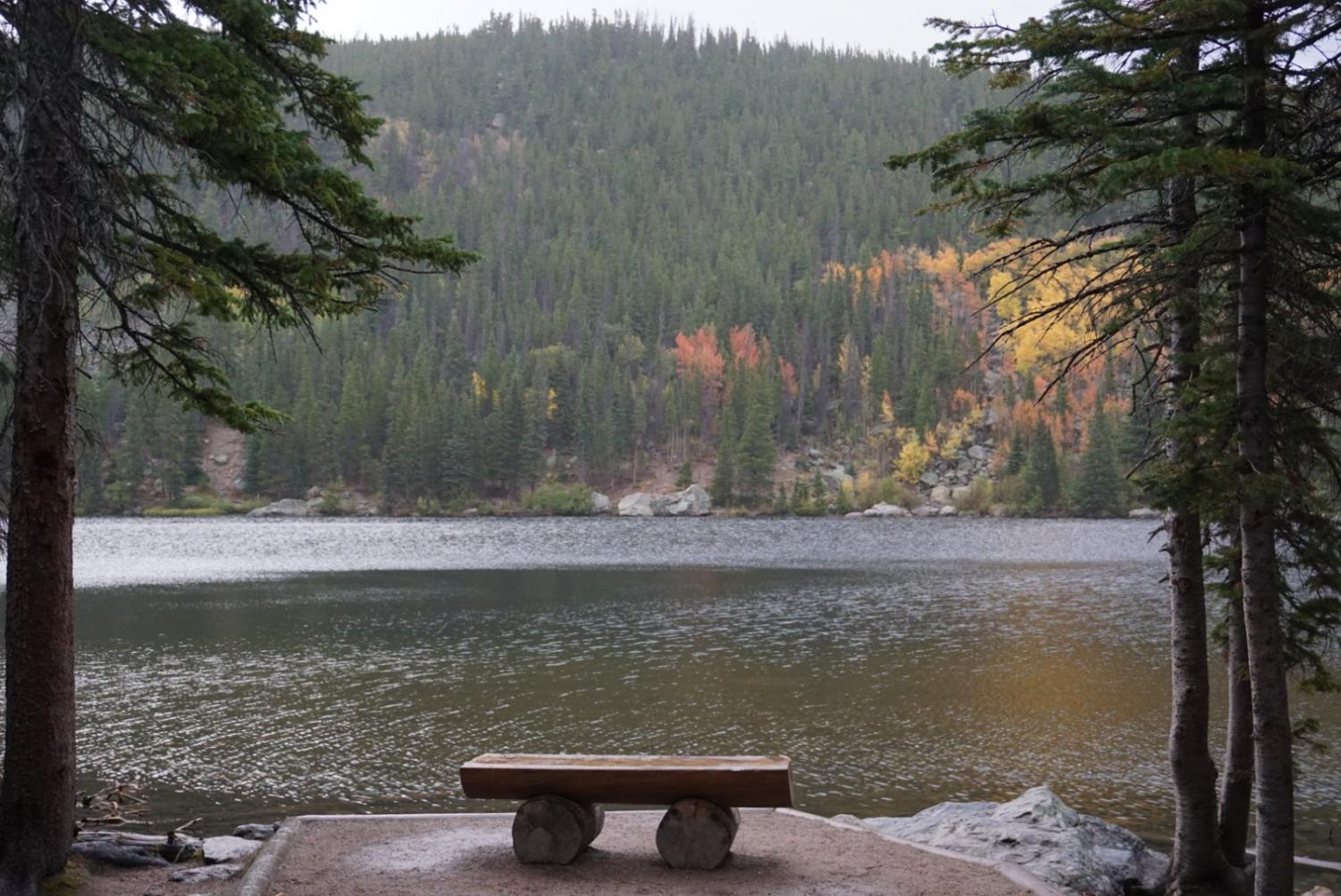 A bench in Colorado sitting on the Bear Lake trail. Colorado helped me cope with how I was feeling.