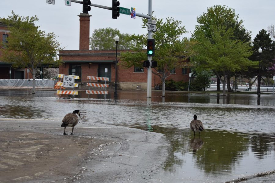 The+flooding+in+Davenport+has+reached+River+Drive+with+water+deep+enough+to+surround+buildings.+Geese+and+ducks+are+able+to+venture+from+the+river+to+the+downtown+area.+