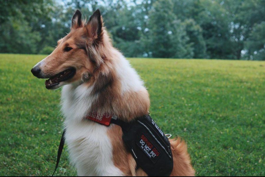Dogs of Kirkwood: Levi
