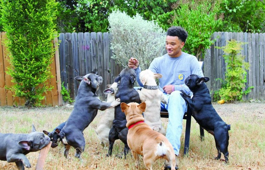 Breeding bulldogs brings in big bucks