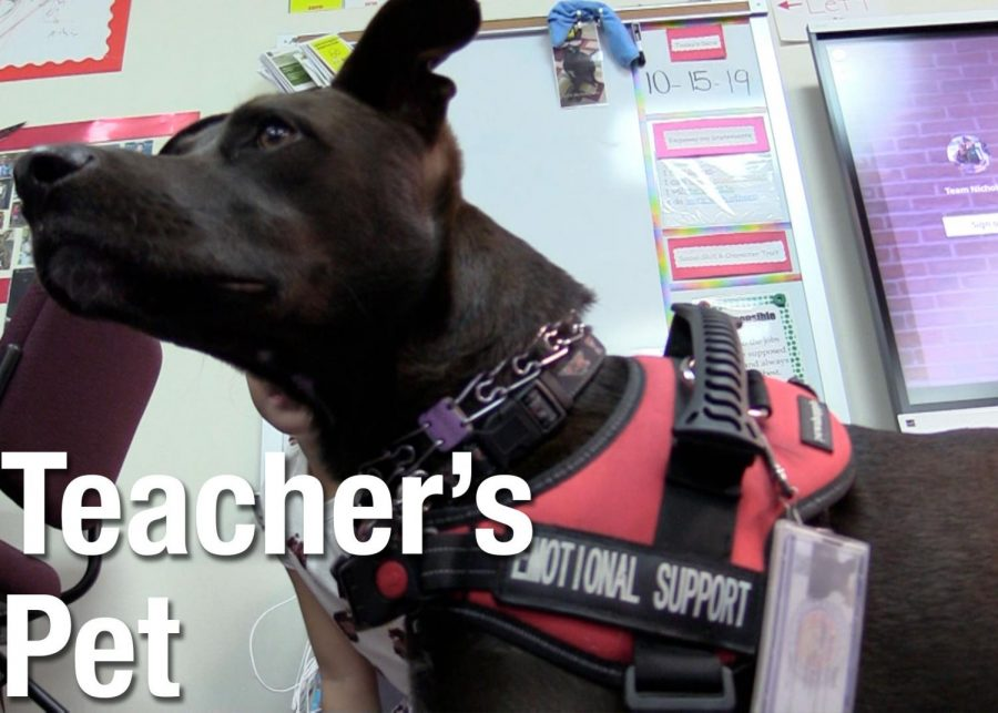 Video: Teacher's Pet