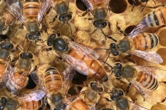 Pictured are bees from junior Jay and his father Bob Provost