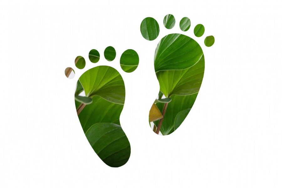 Our Footprint Ep. 2: Turning a new leaf