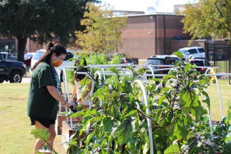 Coppell East science teacher Jodie Deinhammer works in the Coppell Middle School East garden on Friday. Deinhammer created this garden to help foster students
