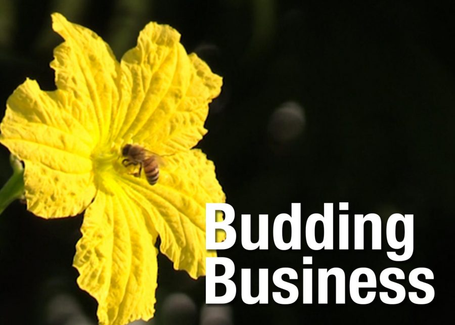 VIDEO: Budding business