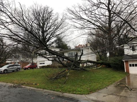 A tree crashed into utility poles across the street from junior Peter Silvia