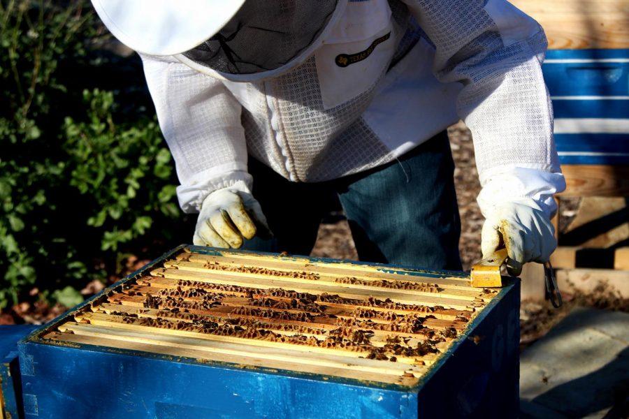 Buzz around bees
