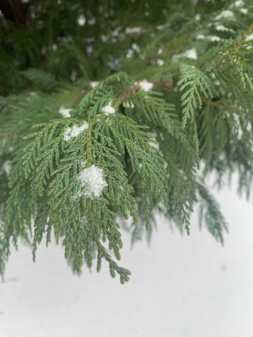 Trees are covered in snow on Sunday. Since Monday, Coppell has been navigating power outages and water shortages as a result of freezing temperatures and snow.