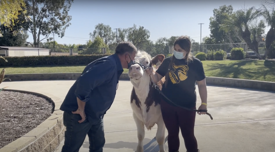 Not his first rodeo — English teacher who grew up on a dairy farm gets most student votes to kiss the cow as culmination of Future Farmers of America Awareness Week