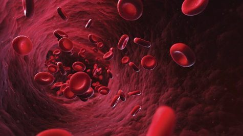 Anemia is a disorder in which the body cannot produce enough healthy red blood cells, often leading to fatigue.